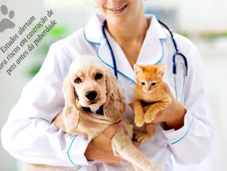 Alerta: castração de pets antes da puberdade nem sempre é a ideal