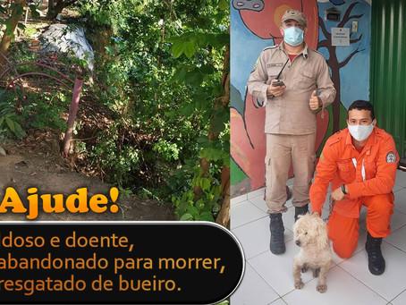 Ajude! APIPA acolhe cão idoso e doente resgatado de bueiro em Teresina