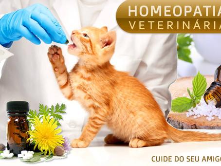 Homeopatia: a importância do tratamento em animais