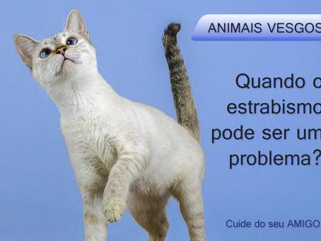 Animais vesgos: quando isso pode ser um problema?