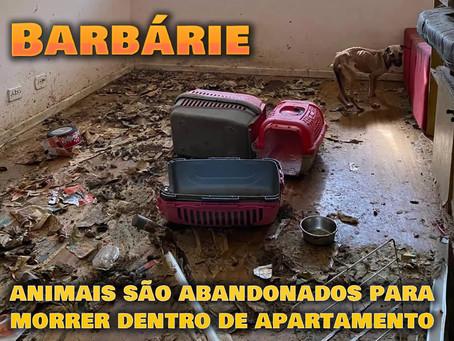 Barbárie: animais mortos e outros se alimentando dos corpos em apartamento no ES