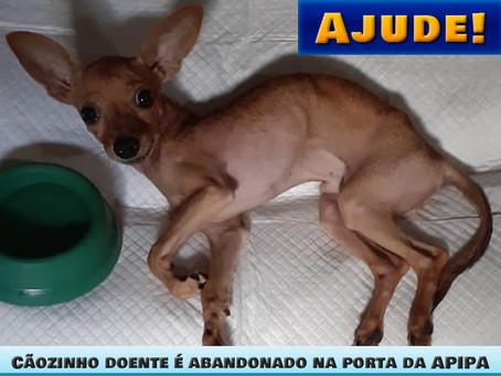 Ajude! Cãozinho doente é abandonado na porta da APIPA