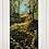 Thumbnail: Autumn Wilderness