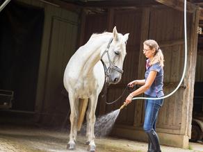 Comment bien rafraîchir son cheval quand il fait chaud ?