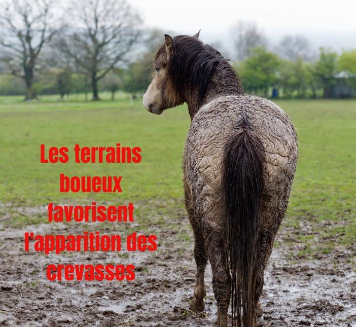 crevasse cheval pré