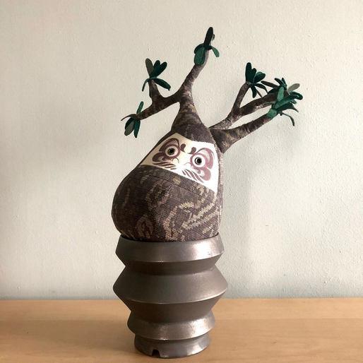 象牙宮達磨-Pachypodium daruma