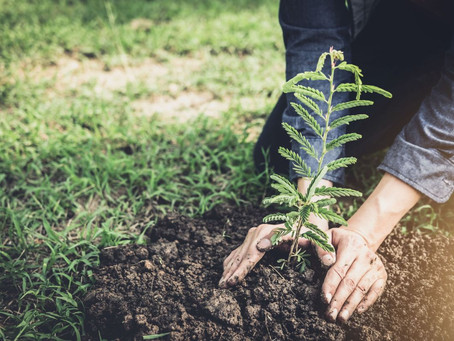 We are planting a forest for the future