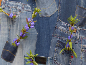 Greener Jeans? Scientists Use Bacteria to Make Sustainable Indigo Dye