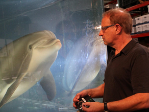 Animatronic dolphins could replace captive animals at theme parks one day