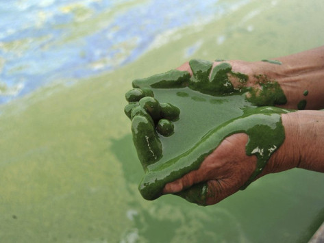 Green and clean: New eco-friendly and sustainable way to fight water pollution