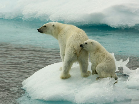 Do humans actually cause global climate change?