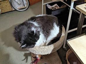 Beloved cat inspires half-million-dollar donation to animal shelter
