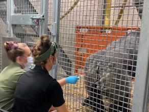 Cincinnati Zoo to vaccinate animals against COVID-19