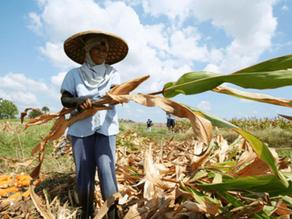 Adding Human Gene Boosts Crop Yields by 50 Percent