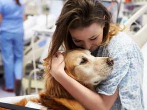 Could a brain cancer treatment for man's best friend also be viable in humans?