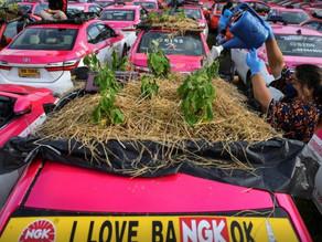 Thai cabbies turn taxis into gardens amid COVID-19 crunch
