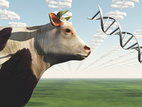 Artificial transgenes help scientists track genetically modified animals in the wild
