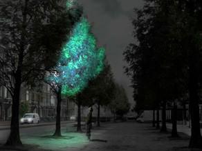 Scientists create light-emitting plants --- eco-friendly urban lighting of the future