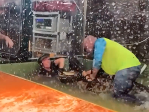 Heroic petting zoo visitor jumps in to save handler from a 'Darth Gator' attack
