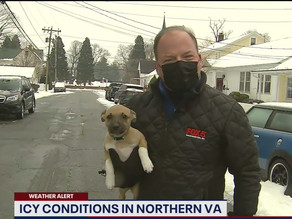 Adorable puppy crashes reporter's live weather report