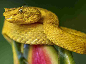 Researchers create snake-derived 'super glue' that stops bleeding in seconds