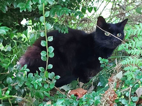 Cat's meows leads rescuers to 83-year-old owner who fell into ravine