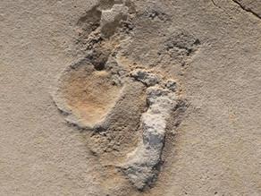 Oldest footprints of pre-humans identified in Crete