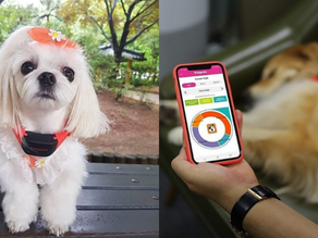 This A.I.-powered collar translates your dog's barks and body language
