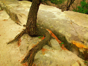 Could the water in bedrock save our forest ecosystems from climate change?