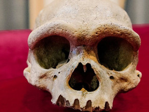 Scientists hail Dragon Man skull discovery as a new species and Homo Sapiens closest relative