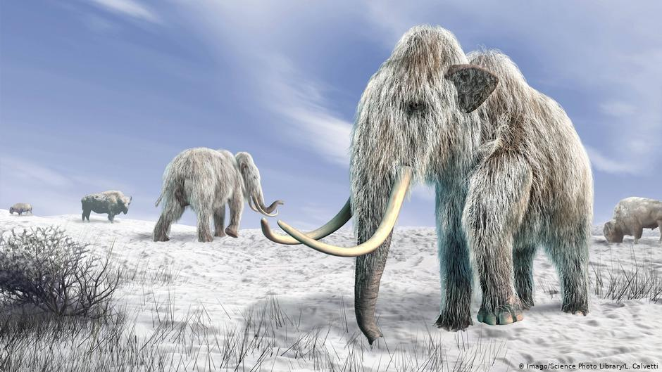 Scientists To Bring Woolly Mammoth Back From Extinction