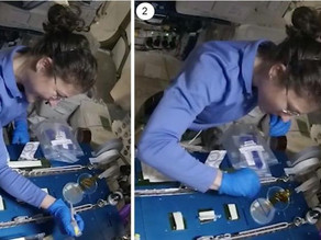 Astronauts demonstrate CRISPR/Cas9 genome editing in space