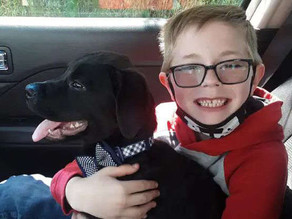 8-year-old sells Pokemon card collection to save his puppy named Bruce