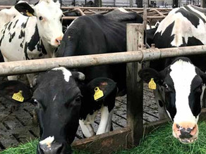Startup wants to convert manure into sustainable fertilizer while trapping greenhouse gases