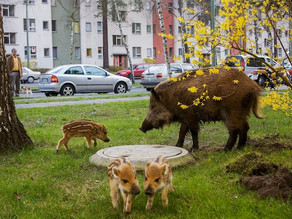 Cities are making all mammals bigger according to a new study