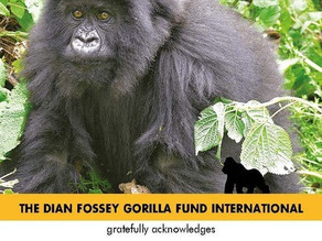 WallStreetBets Users Adopt Gorillas, Raise Over $200,000 for Charity in a Weekend