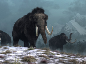 Humans did not cause woolly mammoths to go extinct—climate change did: study