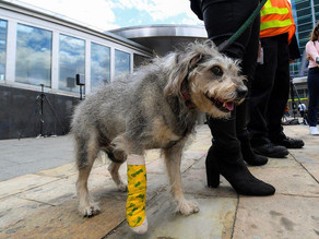 Emotional support dog rescued from train tracks by heroic NYC Transit worker