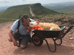 Loving dog owner pushes dying pet dog up favorite mountain in wheelbarrow