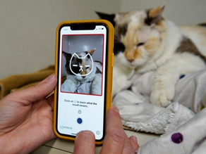 New app uses AI to tell you what your cat is feeling