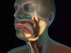 New organ discovered in the human throat that lubricates an area behind the nose