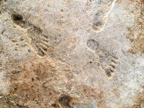 Earliest evidence of human activity found in the Americas