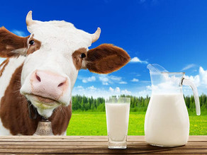 A tech startup is making convincing cow-free milk by genetically engineering yeast