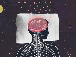 Ever wonder what your brain actually does while you sleep?  Scientists now know.