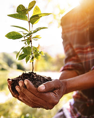 Gift a tree planting in honor or memory