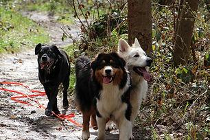 Promenade des chiens