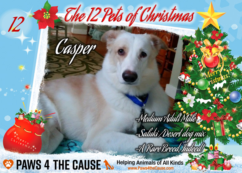 12th day of Christmas Casper