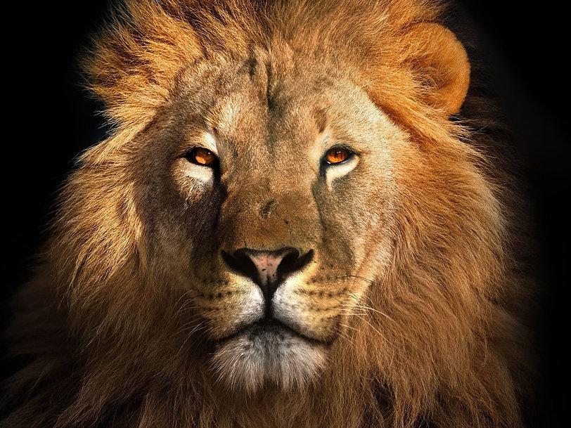 1628511415_lion-1600x1200.jpg
