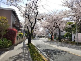 桜とゴールデンウイークのお休みの件