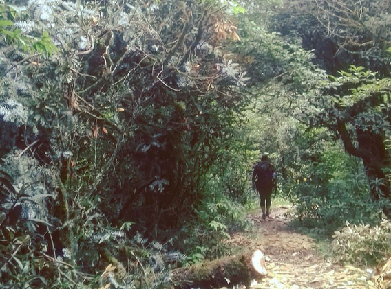 Forest walk to Kalinchowk